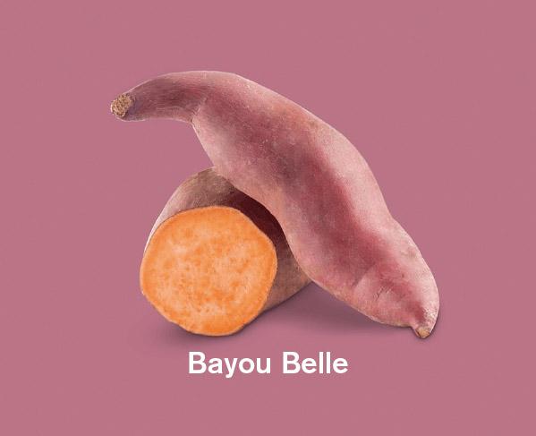 Zoete aardappels ras Bayou Belle