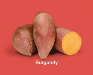 Zoete aardappels ras Burgundy