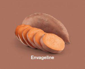 Zoete aardappels ras envageline