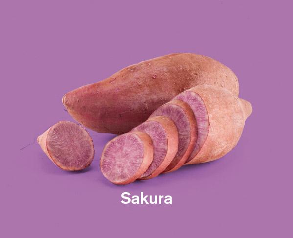Zoete aardappels ras Sakura